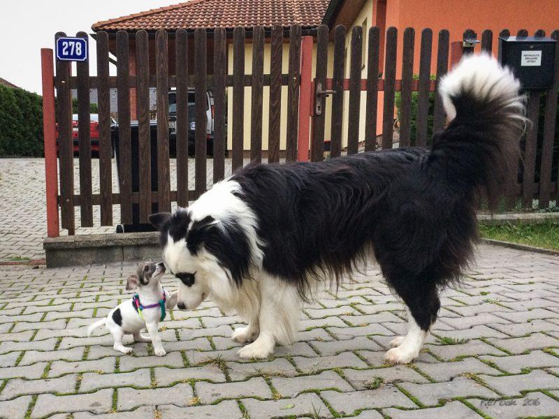 Nový pes!